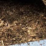 Komposterde - Humus